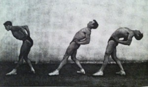 Backward, forward slits, trunk extension